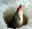 Мертвая рыба в Волге
