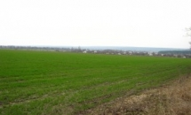 В Саратовской области засеяно 2 млн. га яровых культур