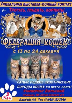 В Вольске пройдет выставка «Федерация кошек»
