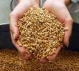 Информация о ходе уборочных работ и заготовки кормов в Вольском муниципальном районе